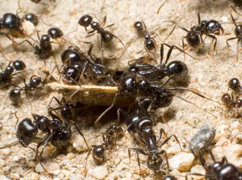 Ants, Insects and Spiders
